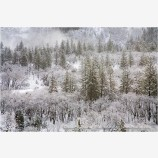 Winter Snow 5 Stock Image,