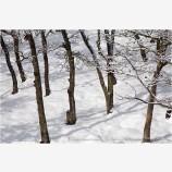 Winter Snow 6 Stock Image,