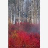 Crimson Marsh Stock Image, Oregon