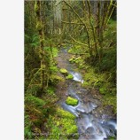 Williams Creek Stock Image, Oregon
