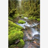 Rain forest Runoff Stock Image, Oregon