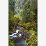 Enchanted Forest Print, North Umpqua, Oregon