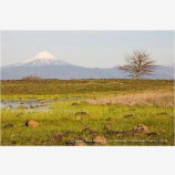 Mt. McLoughlin From Upper Table Rock 1 Stock Image,