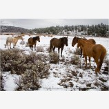 Horses in Snow 2 Stock Image,