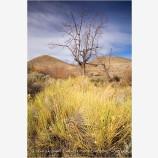 Alvord Desert 5 Stock Image, Harney County, Oregon