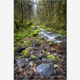 Forest Stream 4 Stock Image,