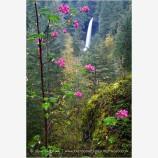 Waterfall 9 Stock Image,