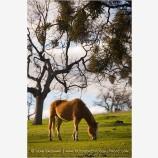 Horse 1 Stock Image,