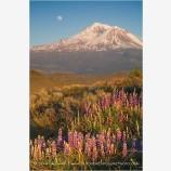 Mt. Shasta 2 Stock Image,