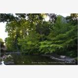 Lithia Park 6 Stock Image,