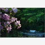 Lithia Park 7 Stock Image,
