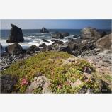 Northern California Coast 2 Stock Image,