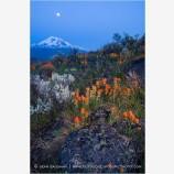 Shasta Nightfall Stock Image, Mt. Shasta