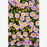 Daisy Cluster Print
