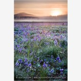 Prairie Dawn Stock Image,