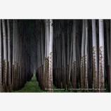 Future Forest Stock Image, Oregon