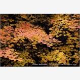 Autumn Emerging Stock Image, Rogue River, Oregon