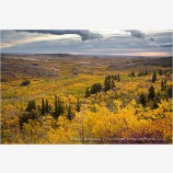 Montana Fall Foliage Stock Image,