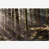 Deep Forest Stock Image