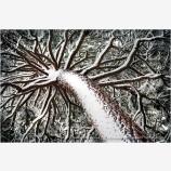 Snow Pine Print