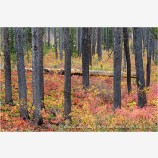 Fall Ground Cover Stock Image