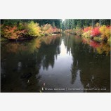 Vine Maple Along The Rogue River 2 Stock Image,