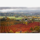 Rogue Valley Orchards In Fall 1 Stock Image,