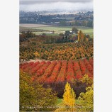 Rogue Valley Orchards In Fall 2 Stock Image,