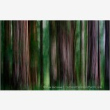 Grove Of Shadow And Light Print, Redwood State Forest, California