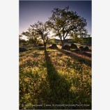 Land Of Pure Sunlight Stock Image, Oregon
