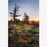 Siskiyou Sunrise Stock Image, Siskiyou Range, Oregon