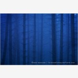 Blue Velvet Forest Stock Image
