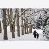 Lithia Park in Snow 5 Stock Image,