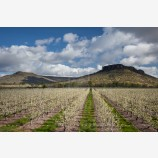 Pear Orchard and Lower Table Rock Stock Image, Oregon
