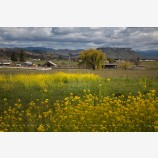 Rogue Valley Farmland 3 Stock Image, Oregon