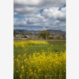 Rogue Valley Farmland 4 Stock Image, Oregon
