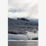 Emigrant Lake in Winter 5 Stock Image