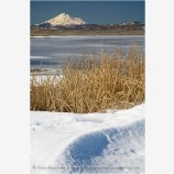 Lower Klamath Wildlife Refuge 10 Stock Image,