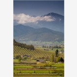 Rogue Valley in Spring 8 Stock Image,