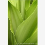 Verde Stock Image