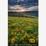 Rowena Hills Stock Image, Columbia Gorge, Oregon