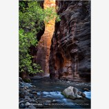 Light In The Narrows Stock Image, Zion, Utah