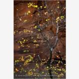 Sandstone Autumn Stock Image, Zion, Utah