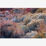 Desert Garden Stock Image, Great Basin, Nevada