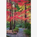 Autumn Park Stock Image, Ashland, Oregon
