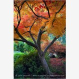 Fall Fantasy Stock Image, Ashland, Oregon