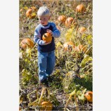 Kid in a Pumpkin Patch Stock Image