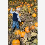 Kid in a Pumpkin Patch 2 Stock Image