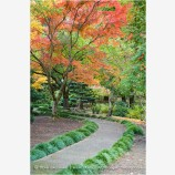 Japanese Garden Fall 4 Stock Image, Lithia Park, Ashland, Oregon