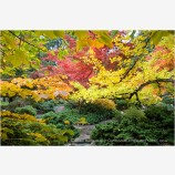Japanese Garden Fall 6 Stock Image, Lithia Park, Ashland, Oregon